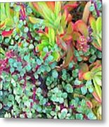 Colorful Succulent Plants For You Metal Print