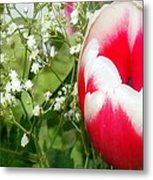 Colorful Tulip Metal Print by Jose Lopez