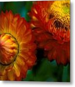 Colors Of Fall Metal Print by Kathy Yates