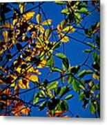 Colors Of The Autumn Elm Metal Print