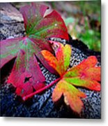 Colors Of The Autumn Forest Metal Print