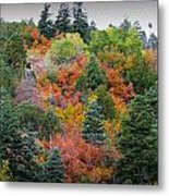 Colors Of The Sandia Forest Metal Print