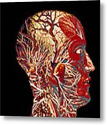 Colour Artwork Of Nerve & Blood Supply Of Head Metal Print