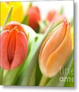 Colourful Tulips Metal Print
