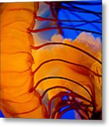 Colours Of The Jelly Fish 3 Metal Print