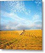 Combine Harvesting A Wheat Field Metal Print