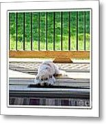 Come Out And Play With Me 2 Metal Print