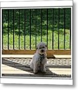 Come Out And Play With Me Metal Print