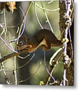 Comfy In A Tree Metal Print