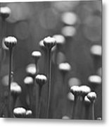 Coming Up Daisies Abstract In Black And White Metal Print