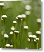 Coming Up Daisies Abstract Metal Print