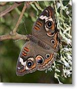 Common Buckeye Butterfly Din182 Metal Print