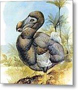 Common Dodo Metal Print