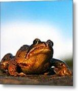 Common Frog Metal Print