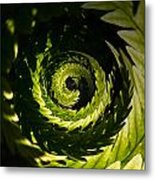 Common Polypody Swirl Metal Print