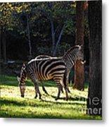 Common Zebras Metal Print