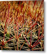 Complexity Of Nature Metal Print