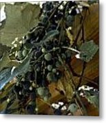 Concord Grapes Metal Print by Heather Grow