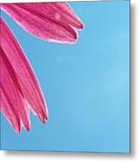 Cone Flower And Blue Sky Metal Print