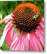 Cone Flower And Guest Metal Print