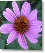 Cone Flower Metal Print by Linda Pope