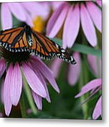 Cone Flowers And Monarch Butterfly Metal Print