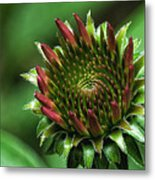 Coneflower Close-up Metal Print