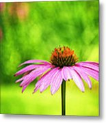 Coneflower In Pink And Green Metal Print