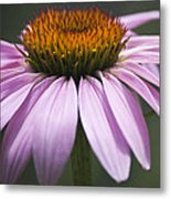 Coneflower Visitor Metal Print