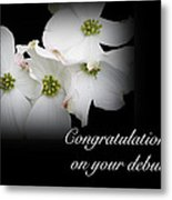 Congratulations On Your Debut - White Dogwood Blossoms Metal Print