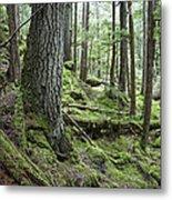 Coniferous Forest, Inside Passage Metal Print