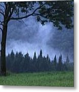 Coniferous Trees Early In The Morning Metal Print