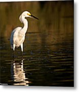 Cool Bird Metal Print