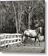 Coosaw - Outside The Fence Black And Wite Metal Print