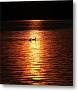Coots In The Sunset Metal Print