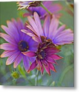 Copper Daisies 1 Metal Print