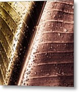 Copper Raindrops Metal Print