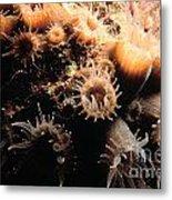 Coral Feeding 5 Metal Print