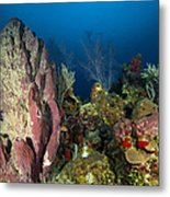 Coral Reef And Sponges, Belize Metal Print