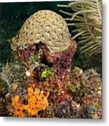 Coral Top Knot Metal Print