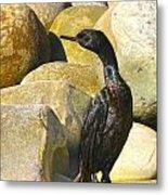 Cormorant 1 Metal Print