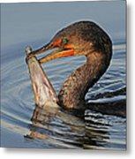 Cormorant With Large Fish Metal Print