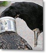 Cormorant With Radio Collar Metal Print