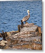 Cormorants And Pelican Metal Print