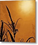 Corn Field Haze  Metal Print