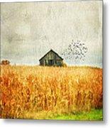 Corn Fields Of Kentucky Metal Print by Darren Fisher