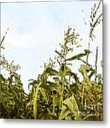 Corn In Summer Metal Print by Artist and Photographer Laura Wrede