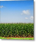 Corn Row Metal Print