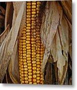 Corn Stalks Metal Print