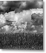 Cornfield And Clouds Metal Print